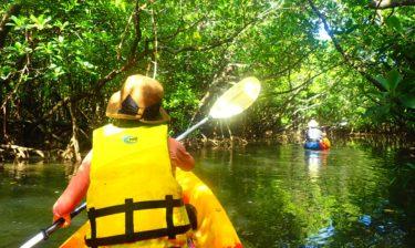 沖縄ではマングローブカヤック・カヌーが絶対おすすめ!インスタ映えの亜熱帯ジャングルで大満足の冒険|お得なクーポンまとめ【体験レポートあり】
